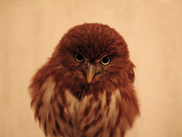 Angry bird -Akihabara, Tokyo