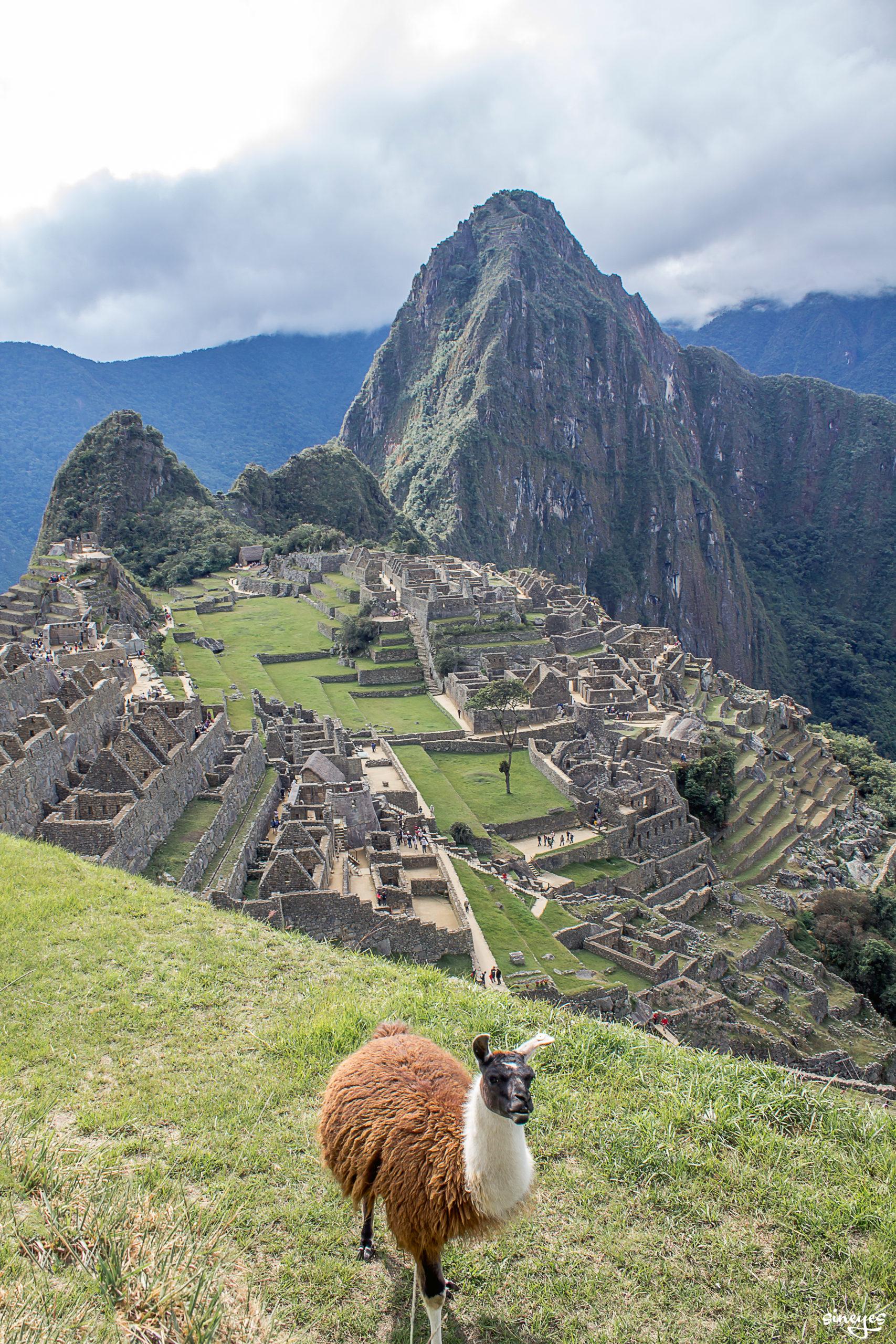 Lama pas content - Machu Picchu, Pérou