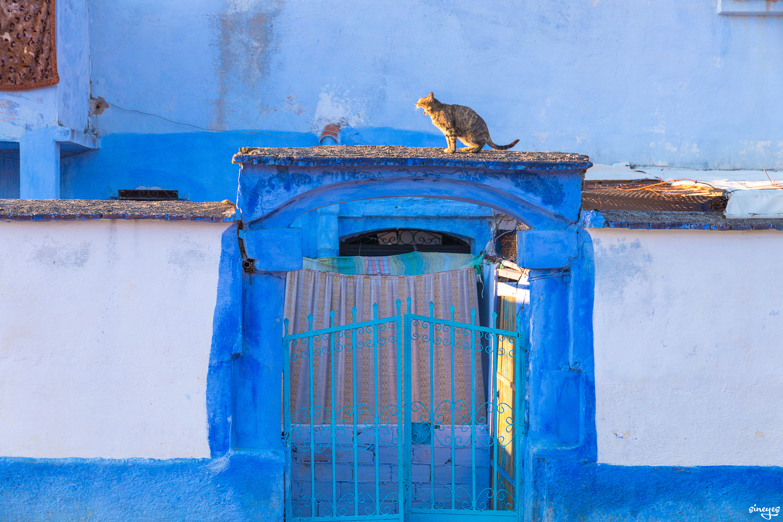 Le Shah - Chefchaouen, Maroc, avril 2018