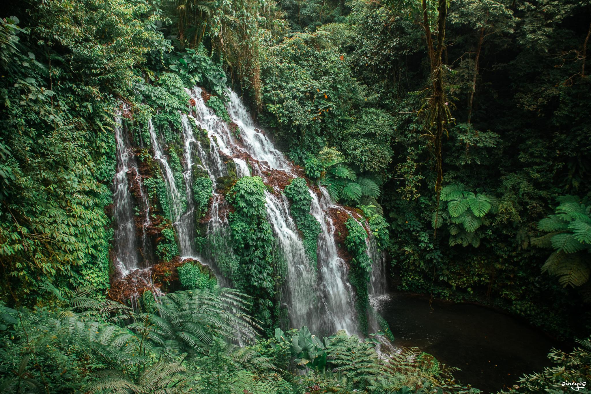 Deep deep jungle by sineyes